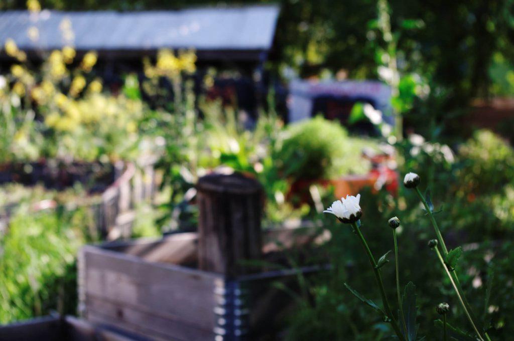 lumorgenstern_bln_prinzessinnengarten3