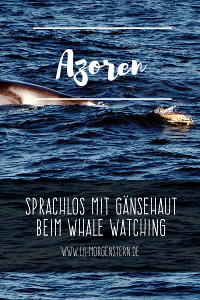Portugal: Whale Watching auf den Azoren