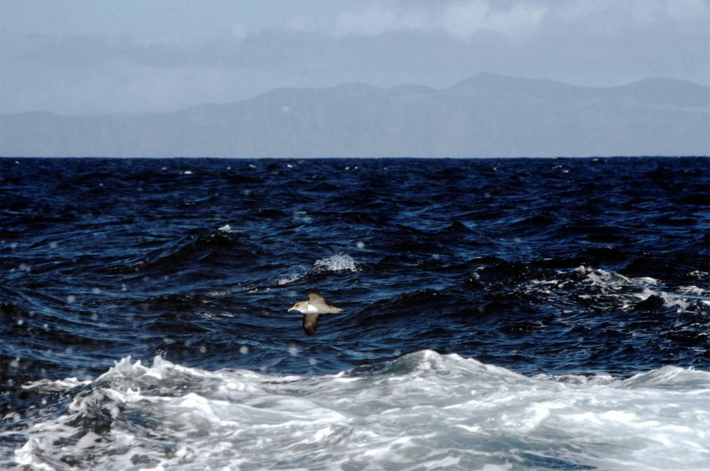 Whale Watching auf den Azoren - Insel Pico