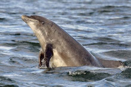 Wal- und Delfinbeobachtung © Charlie Phillips