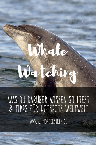 Whale Watching: Was du darüber wissen solltest und Tipps für Hotspots weltweit