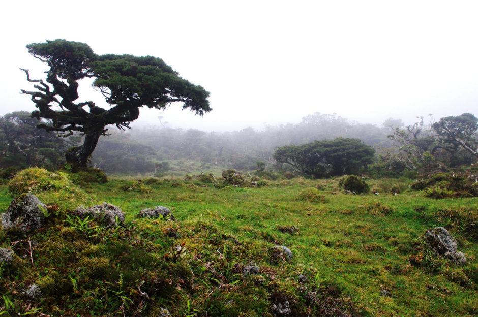 Azoren - Insel Pico - Berge im Nebel