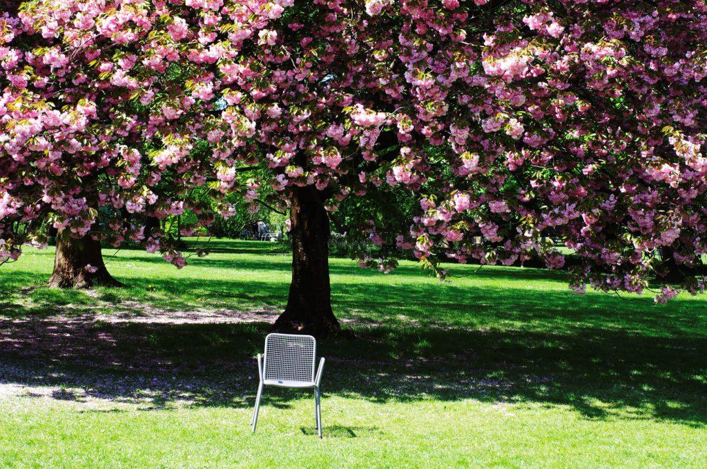 Gärten der Welt Berlin - Blühende Kirschbäume