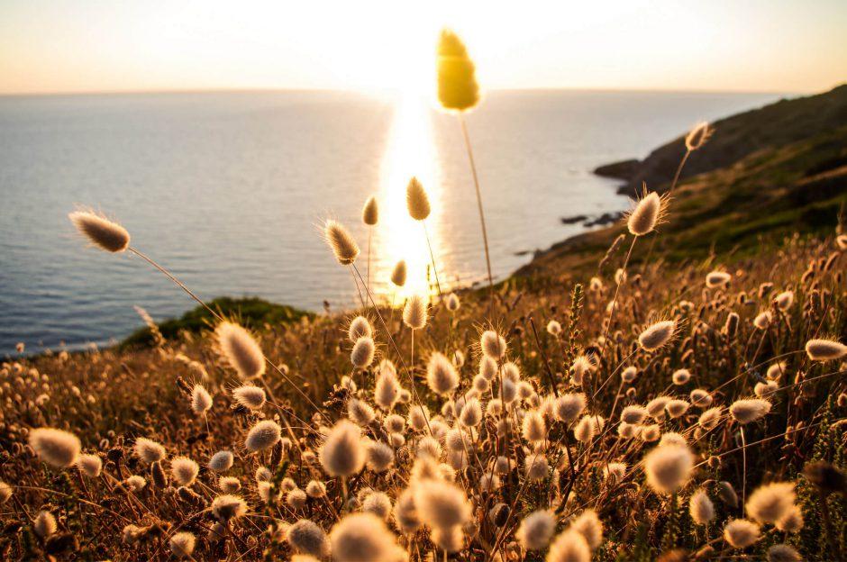 Sardinien - Gräser an der Küste im Sonnenuntergang