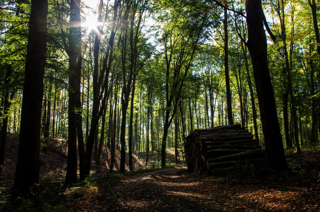 Wald in Brodowin in Brandenburg