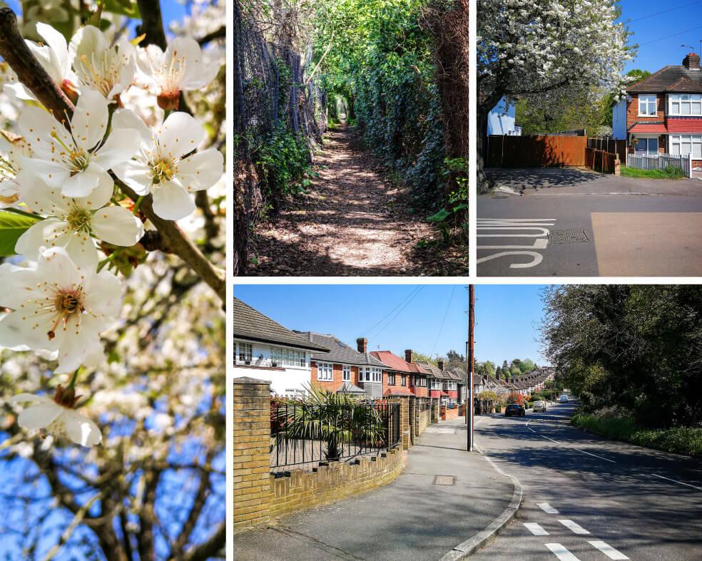 Vorortstraßen in London und blühender Baum