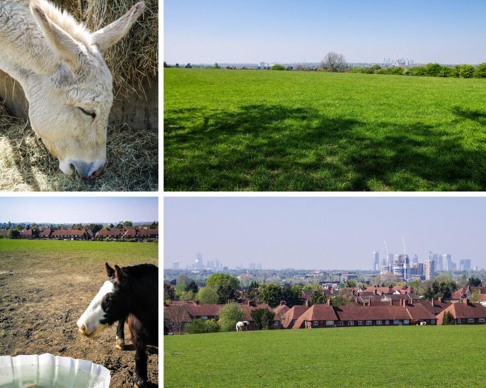 Esel, Pferd, Wiese, englische Wohnhäuser und Wolkenkratzer am Horizont