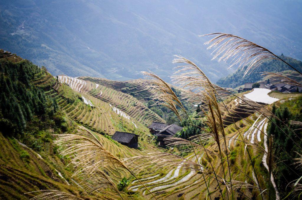 Blick auf die Longsheng Reisterrassen