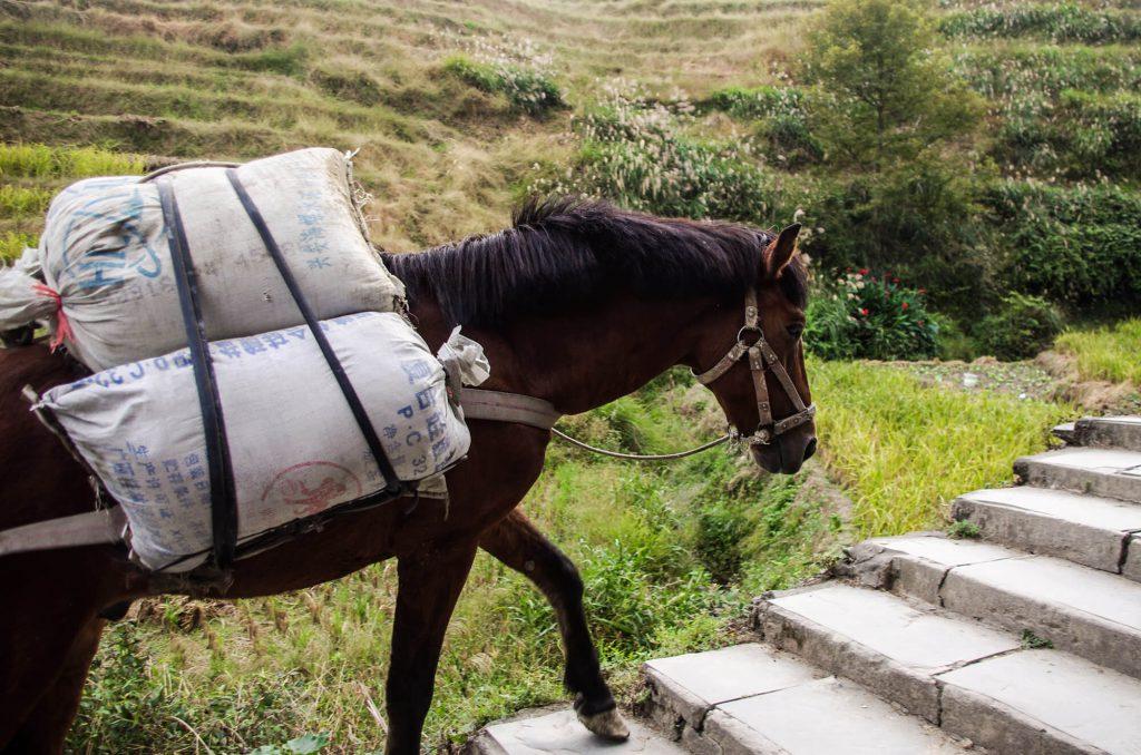 Pferd in Ping´an transportiert Baustoffe auf seinem Rücken