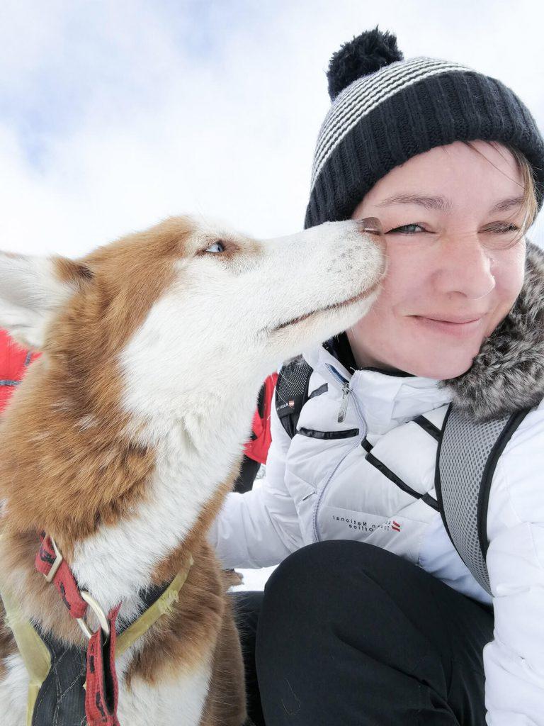 Huskies in Warth-Schröcken