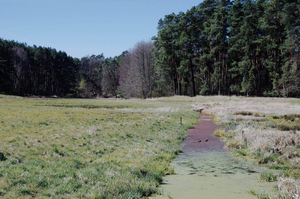 Naturschutzgebiet Finowtal-Pregnitzfließ