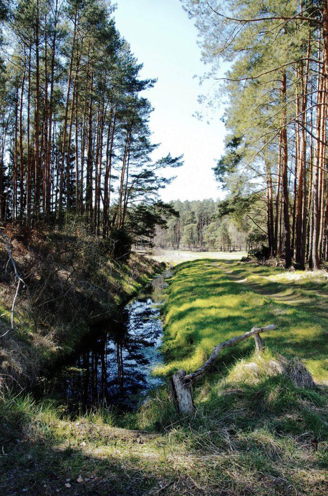 Wanderung im Naturschutzgebiet Finowtal-Pregnitzfließ
