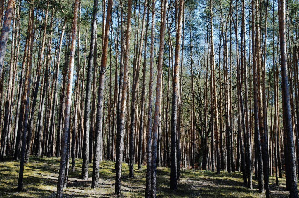 Wald im Naturschutzgebiet Finowtal-Pregnitzfließ