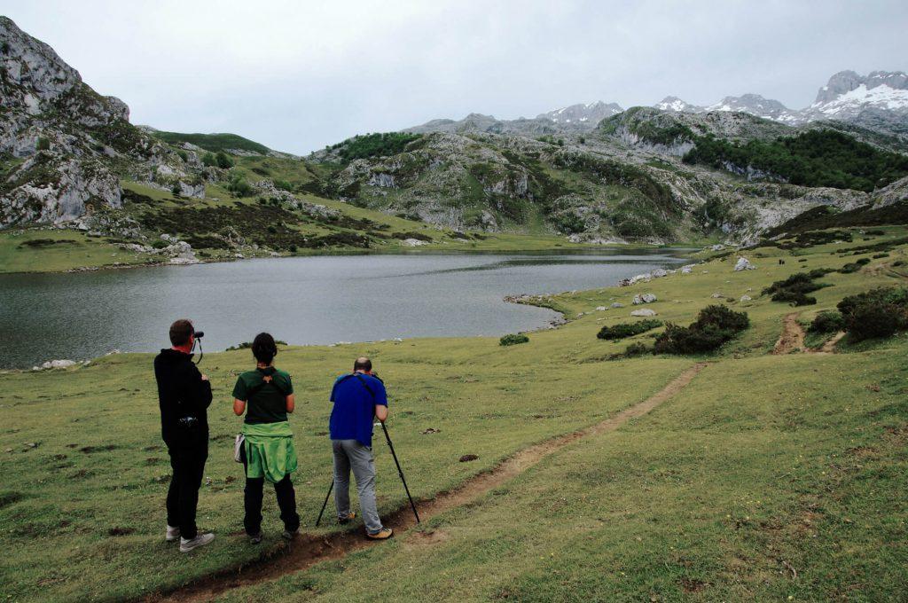 Tipps für Urlaub in Asturien: Birdwatching-Tour