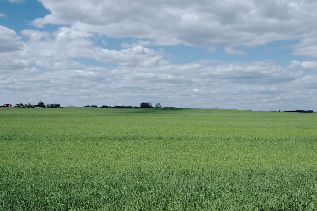 Feld bei Zehdenick