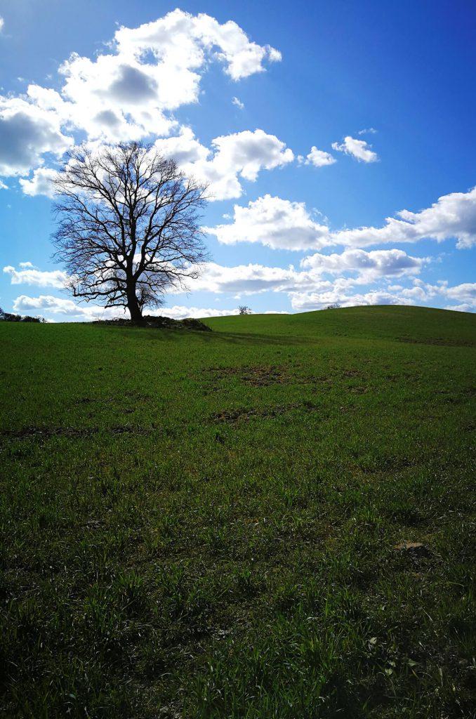 Kahler Baum auf einer Wiese