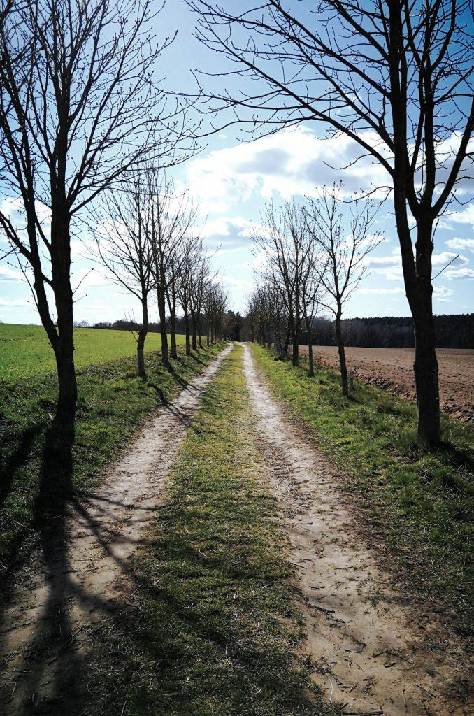 Baumallee und Feldweg - Wanderung um den Wolletzsee