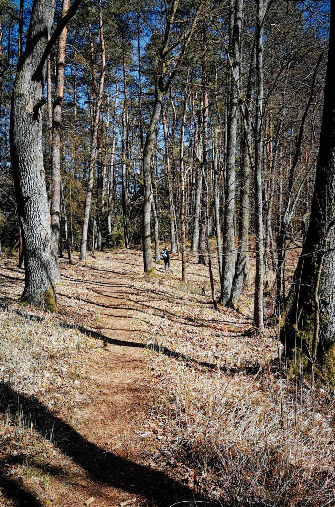 Wald bei einer Wanderung um den Wolletzsee