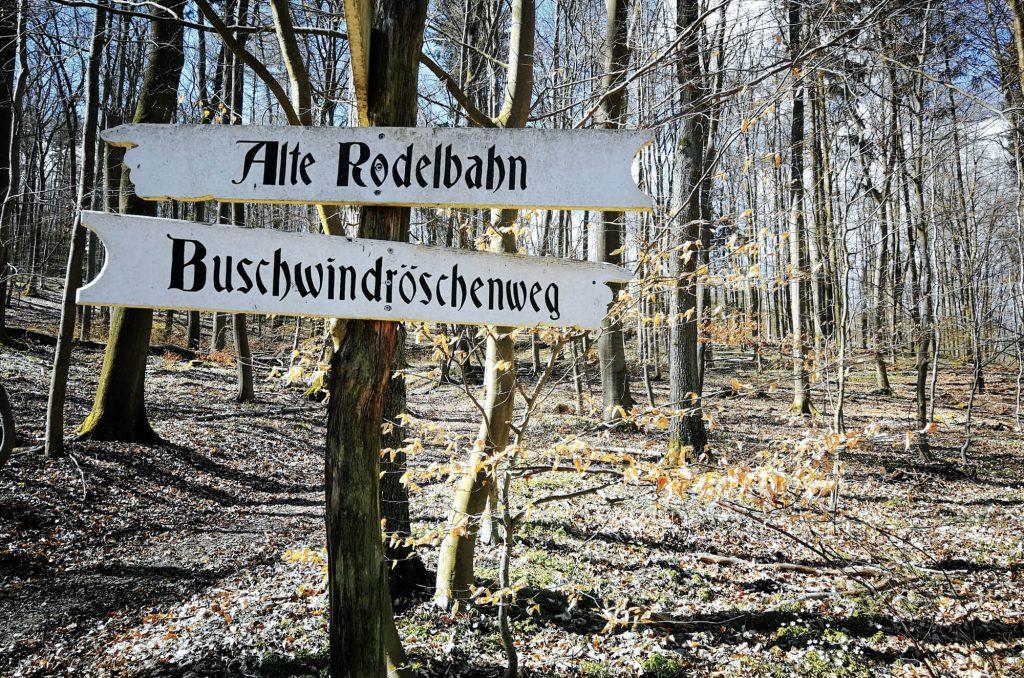 Wegweiser Buschwindröschenweg im Wald am Wolletzsee